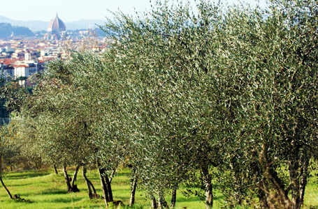 fattoria di Montebeni - panorama su Firenze