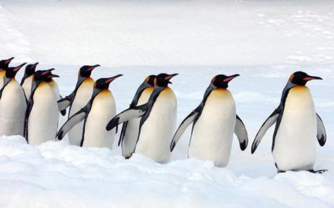 pinguini-001