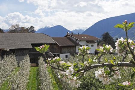 primavera in Trentino